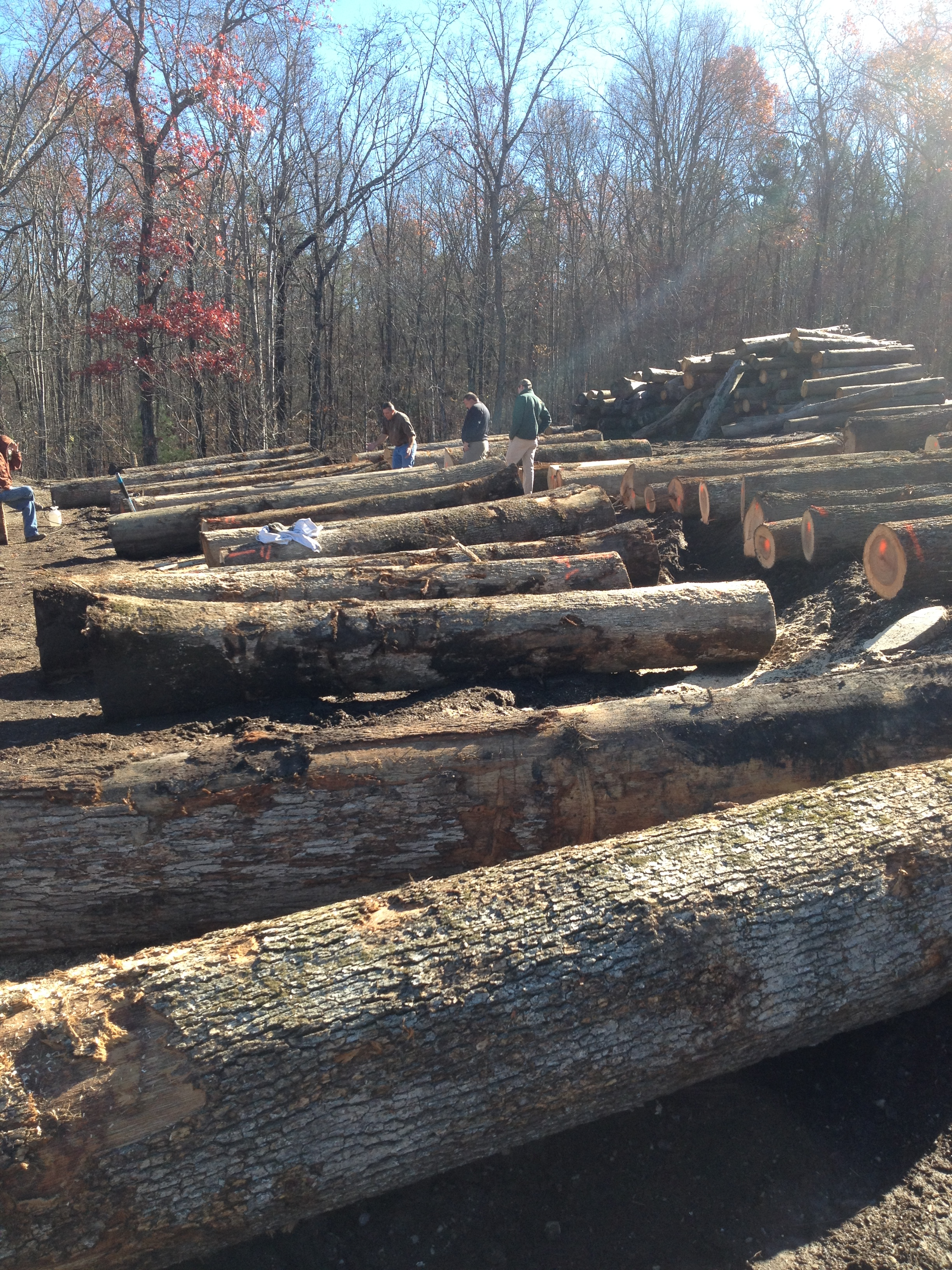 Photo Gallery Southeastern Forest Managementsoutheastern Forest Management